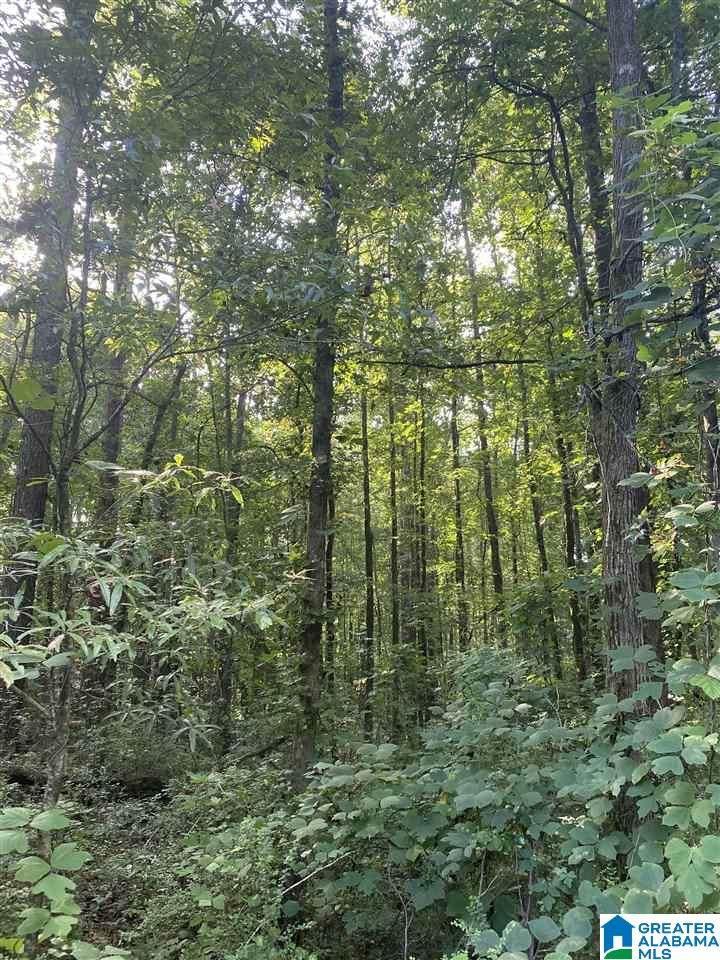16 Acres Highway 431 - Photo 1