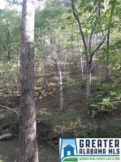 Co Rd 9 #1, Cedar Bluff, AL 35959 (MLS #787801) :: Brik Realty