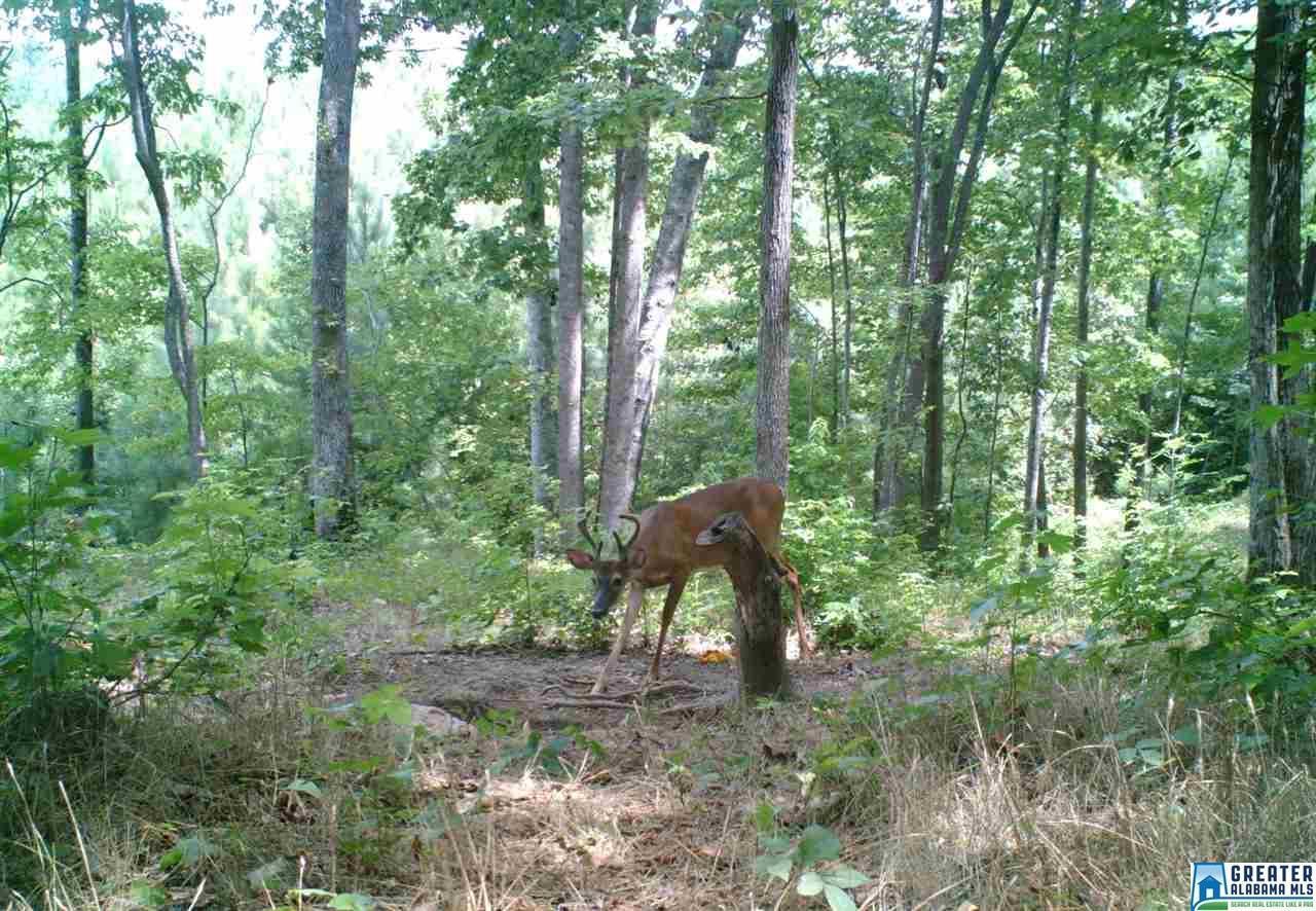 33.40 acres Co Rd 173 - Photo 1