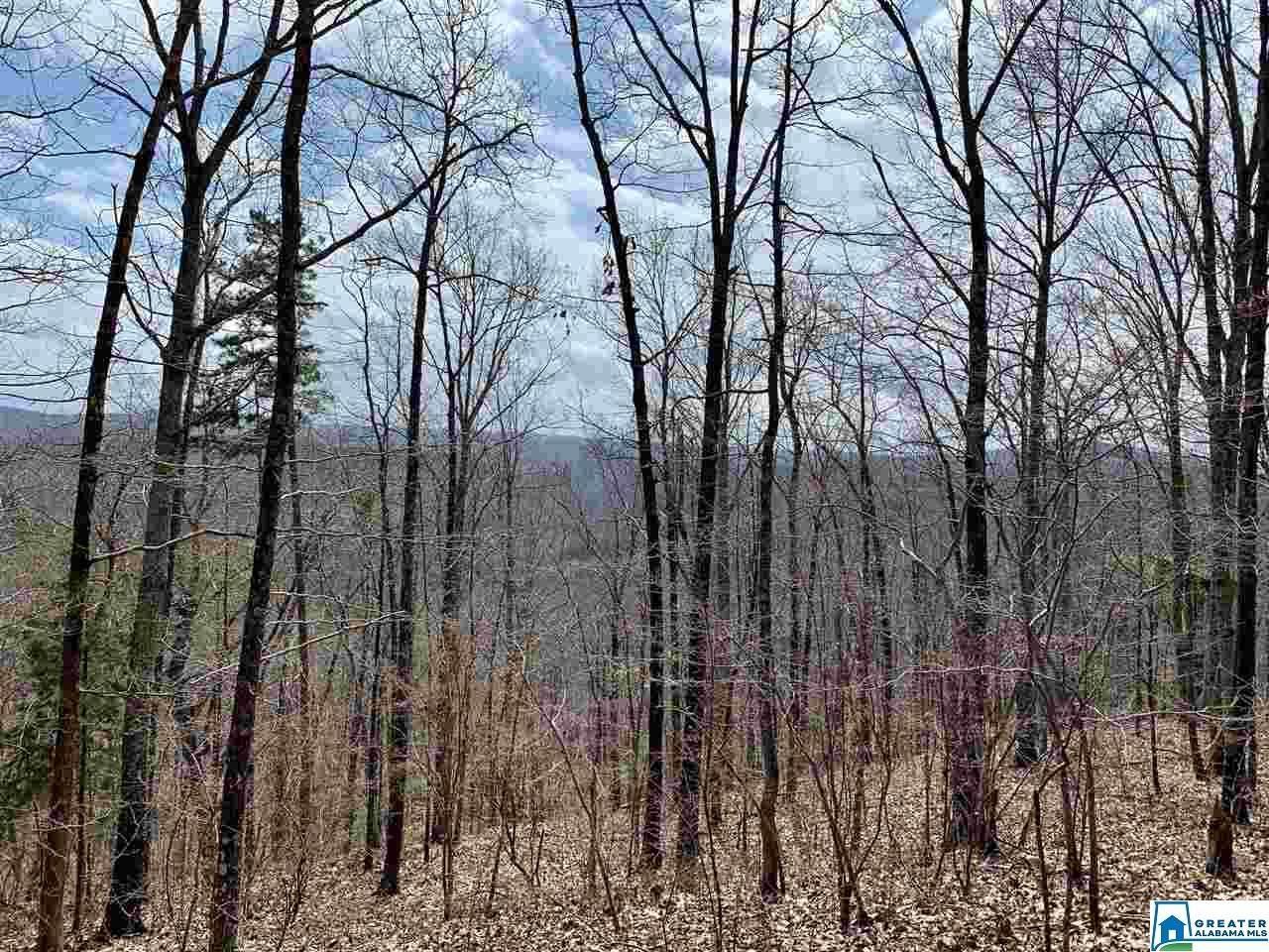 8791 Pine Mountain Rd - Photo 1