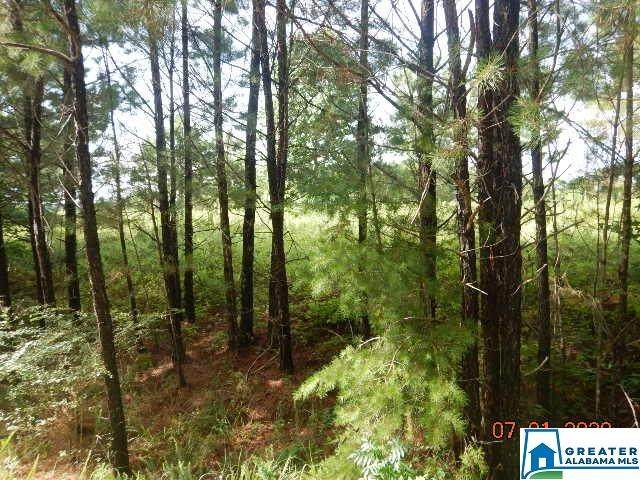 LOT 13 Highland Shores Dr #13, Jasper, AL 35503 (MLS #888097) :: LIST Birmingham