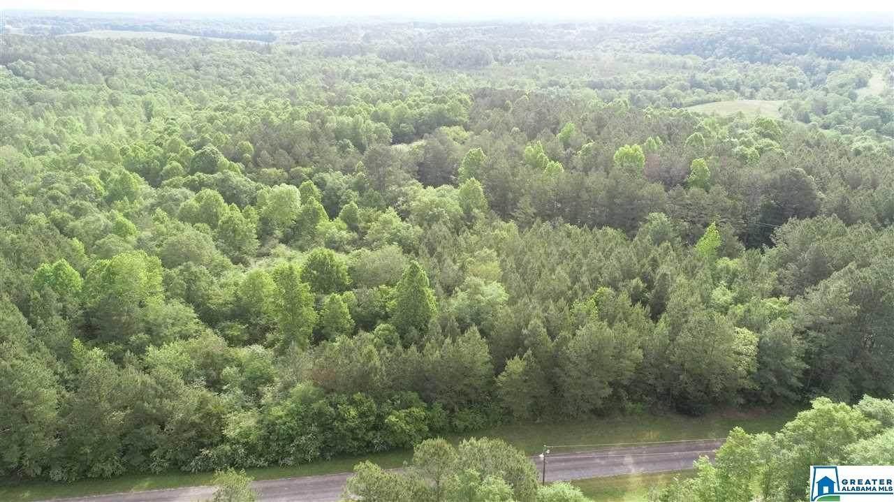 18.6 acres Co Rd 532 - Photo 1