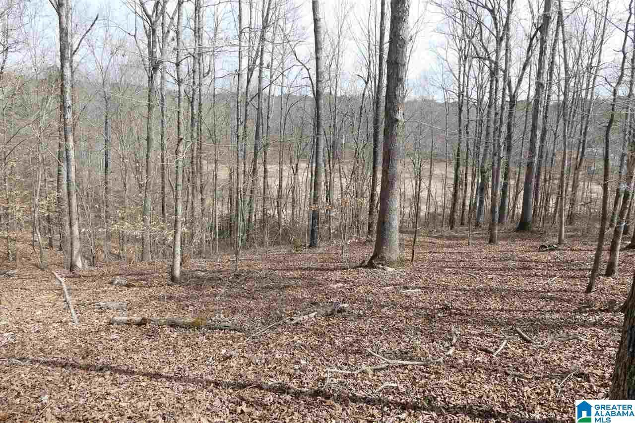 LOT 27 Co Rd 4315 - Photo 1