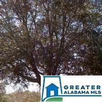 2621 Snow Rogers Rd 2-A, Gardendale, AL 35071 (MLS #850756) :: Bentley Drozdowicz Group