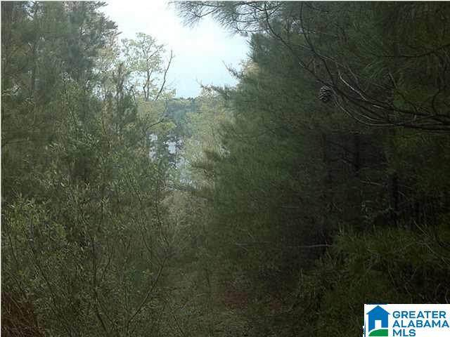 5 Co Rd 919 - Photo 1