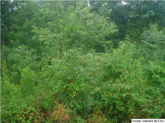Maple Valley Cir Lot 7, Blountsville, AL 35031 (MLS #604125) :: LIST Birmingham