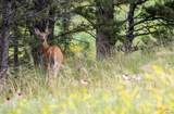 Pronghorn 4 Stage Stop Rd - Photo 15