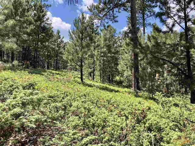 M.S. 1275 Wasp Rd, Lead, SD 57754 (MLS #155000) :: Dupont Real Estate Inc.