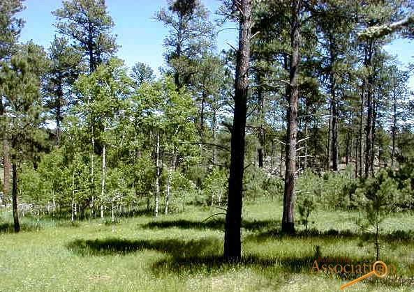 Lot 1 Eagle Ridge Dr, Custer, SD 57730 (MLS #138233) :: Christians Team Real Estate, Inc.