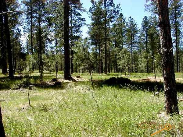 Lot 3 Jack Rabbit Rd, Custer, SD 57730 (MLS #138235) :: Christians Team Real Estate, Inc.