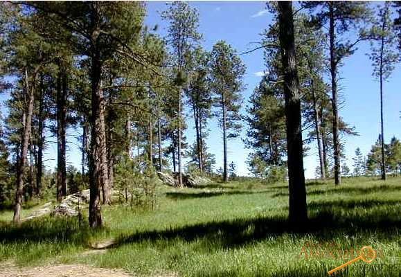 Lot 5 Eagle Ridge Dr, Custer, SD 57730 (MLS #138236) :: Christians Team Real Estate, Inc.