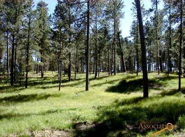 Lot 7 Eagle Ridge Dr, Custer, SD 55730 (MLS #138238) :: Christians Team Real Estate, Inc.