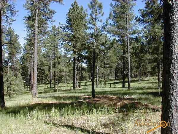 Lot 8 Dragonfly Drive, Custer, SD 57730 (MLS #138240) :: Christians Team Real Estate, Inc.