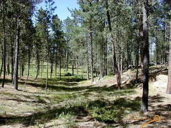 Lot 11 Eagle Ridge Dr, Custer, SD 57730 (MLS #138242) :: Christians Team Real Estate, Inc.