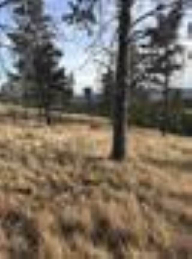 Lot 7 Moose Dr, Hot Springs, SD 57747 (MLS #152665) :: Black Hills SD Realty