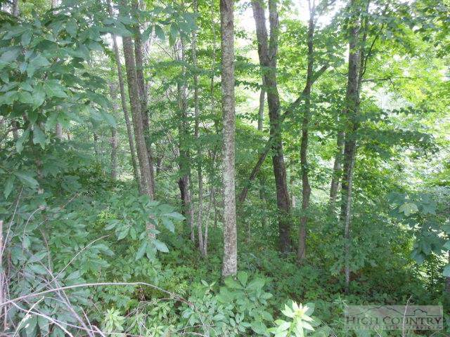 TBD Monarch Lane, Boone, NC 28607 (MLS #192852) :: Keller Williams Realty - Exurbia Real Estate Group