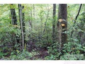 136 Ivy Road, Newland, NC 28657 (MLS #212138) :: RE/MAX Impact Realty
