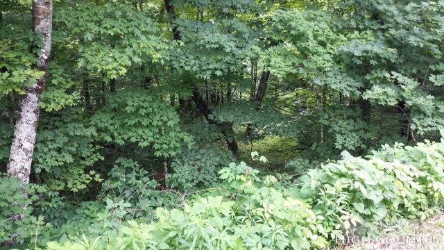 Tbd Woodhaven #18 Reserve At Sugar Mountain, Sugar Mountain, NC 28604 (MLS #213050) :: RE/MAX Impact Realty
