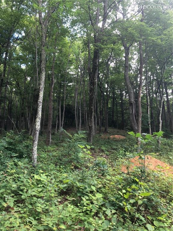 C55 Eagles Nest Trail, Banner Elk, NC 28604 (MLS #217061) :: RE/MAX Impact Realty