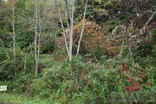 Tbd Chestnut Creek Road, West Jefferson, NC 28694 (MLS #39207018) :: Keller Williams Realty - Exurbia Real Estate Group