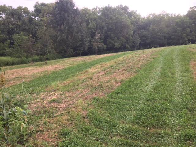 Lot 18 Dalton Way, Smiths Grove, KY 42171 (MLS #20200071) :: Reesy Real Estate Team | Keller Williams First Choice Realty