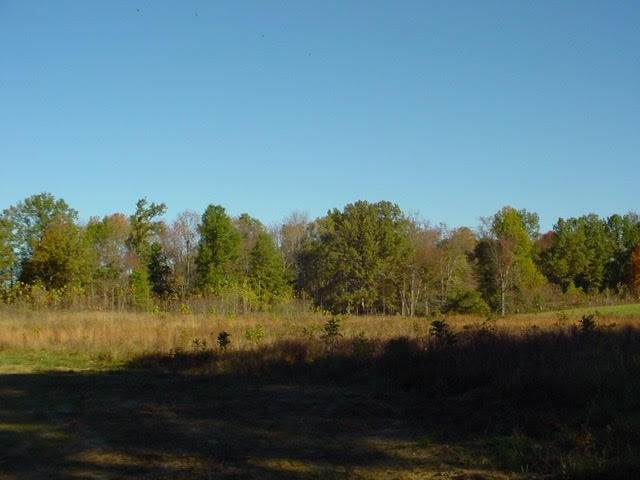 Lot Hundred Acre Pond Rd, Hardyville, KY  (MLS #20211500) :: Reesy Real Estate Team | Keller Williams First Choice Realty