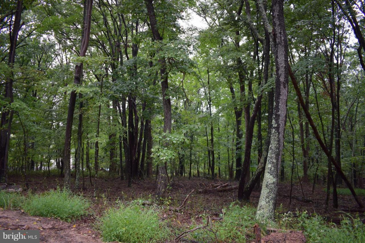 unknown Leaning Oak - Photo 1