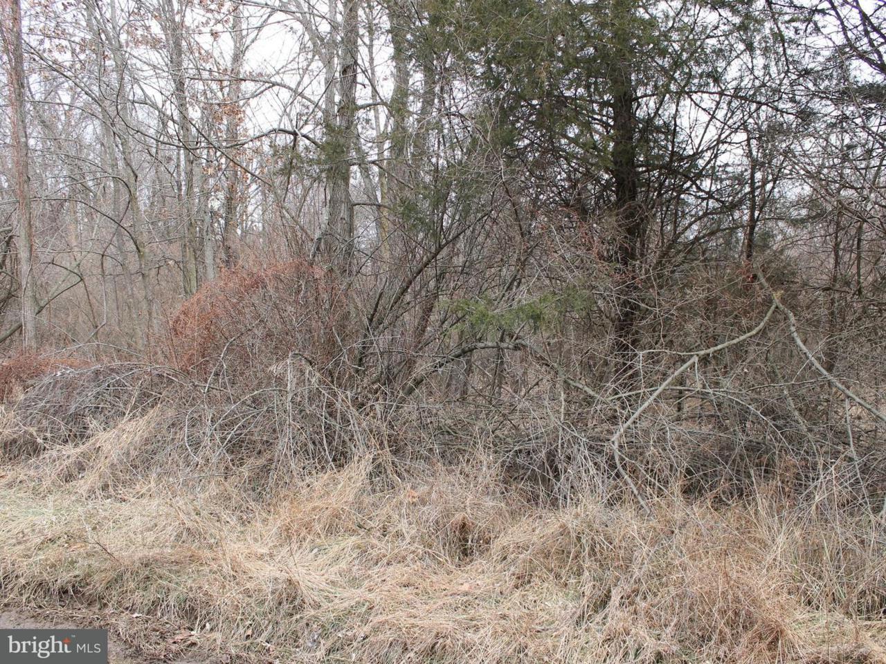 17 Kelly Trail - Photo 1