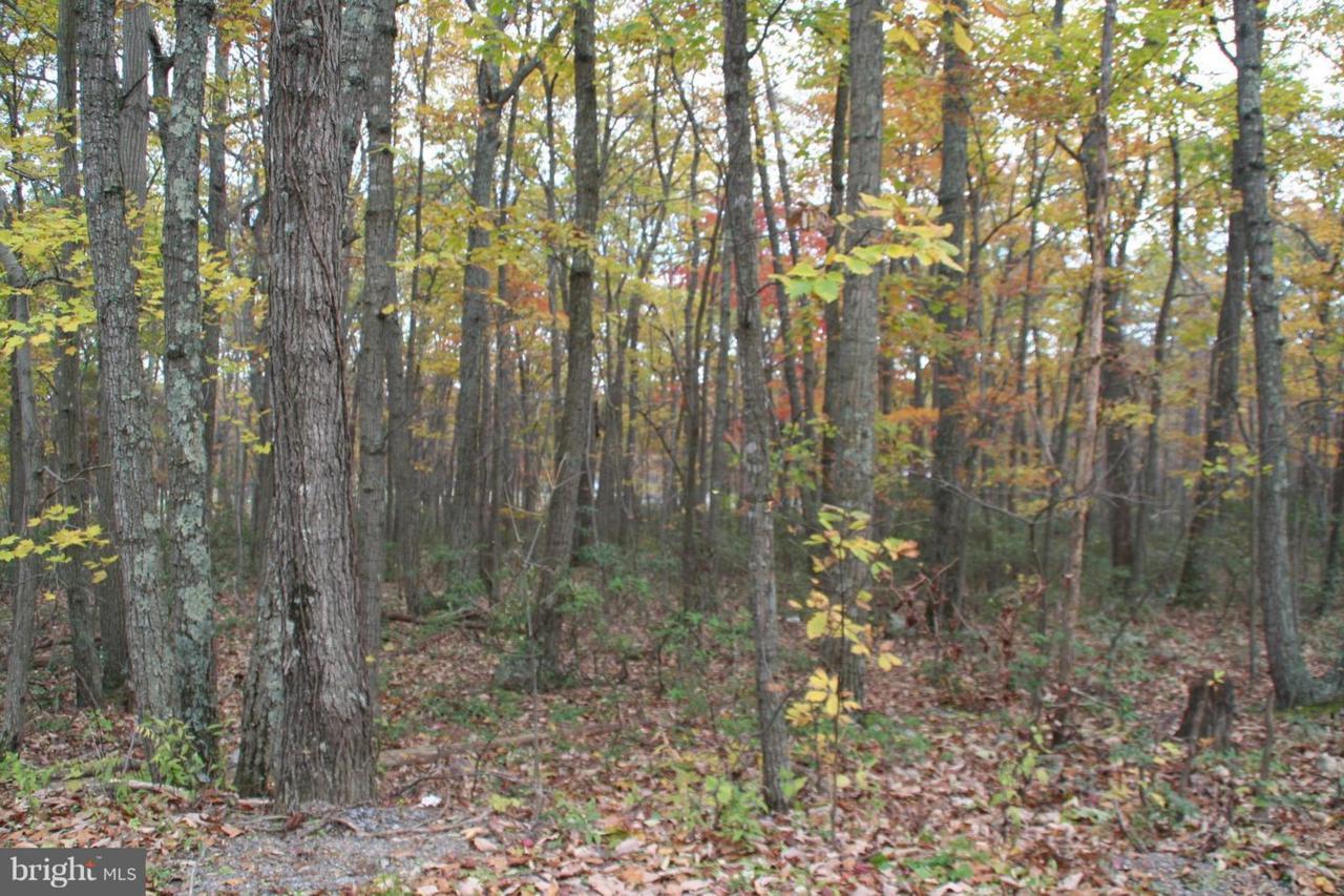 409 Puma Trail - Photo 1
