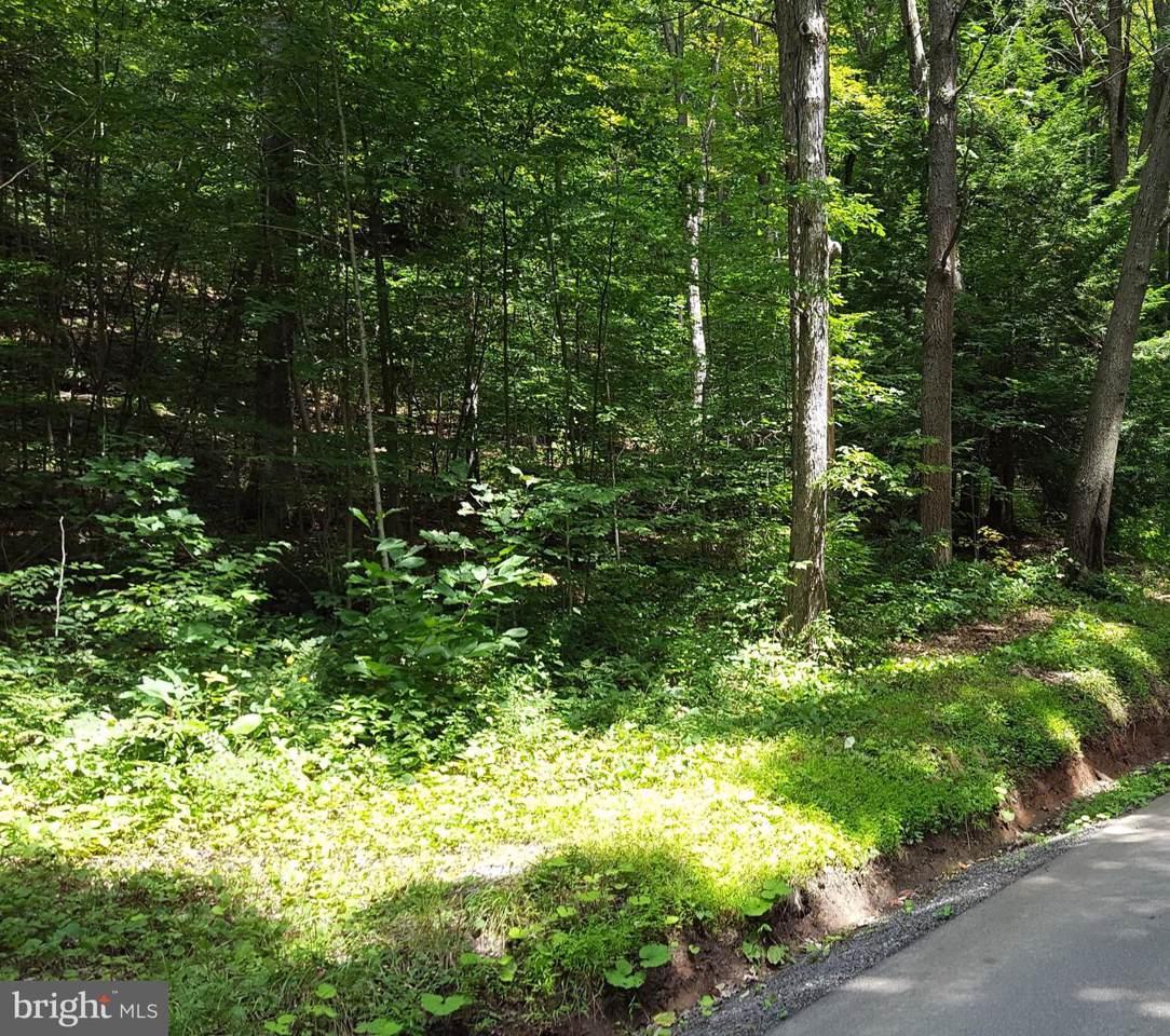 Bear Creek - Photo 1