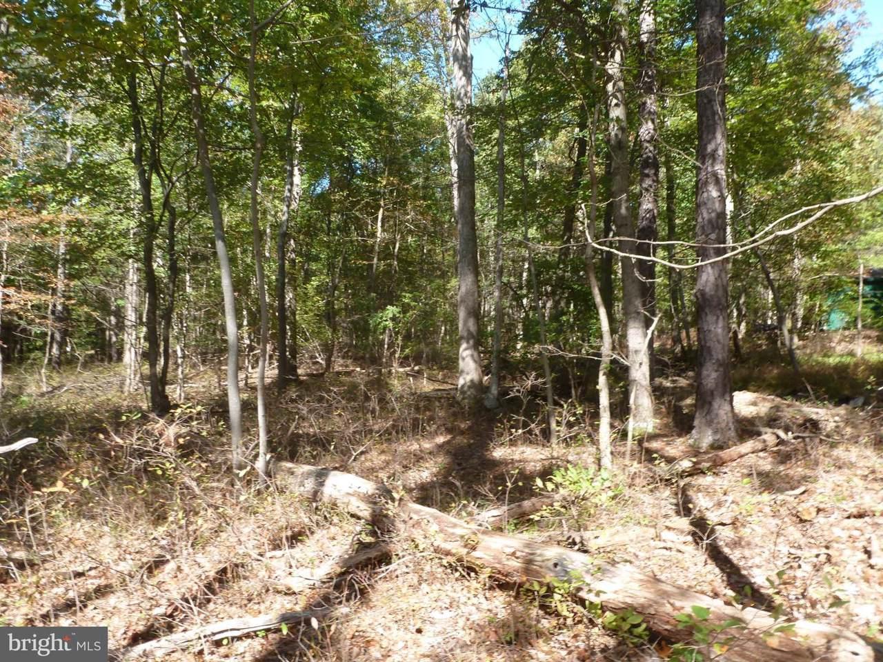Pine Tree Drive - Photo 1