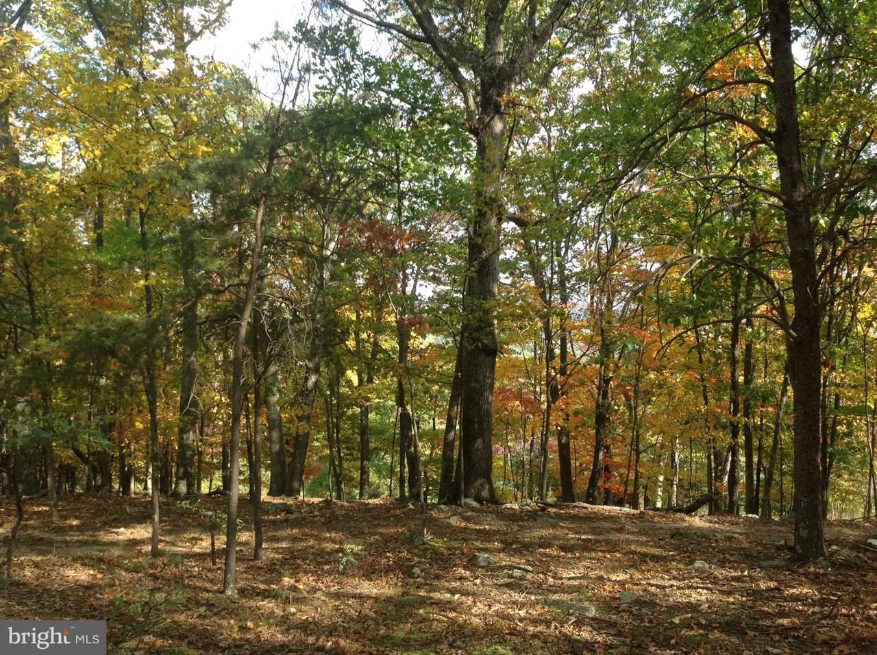 277 Black Oak - Photo 1