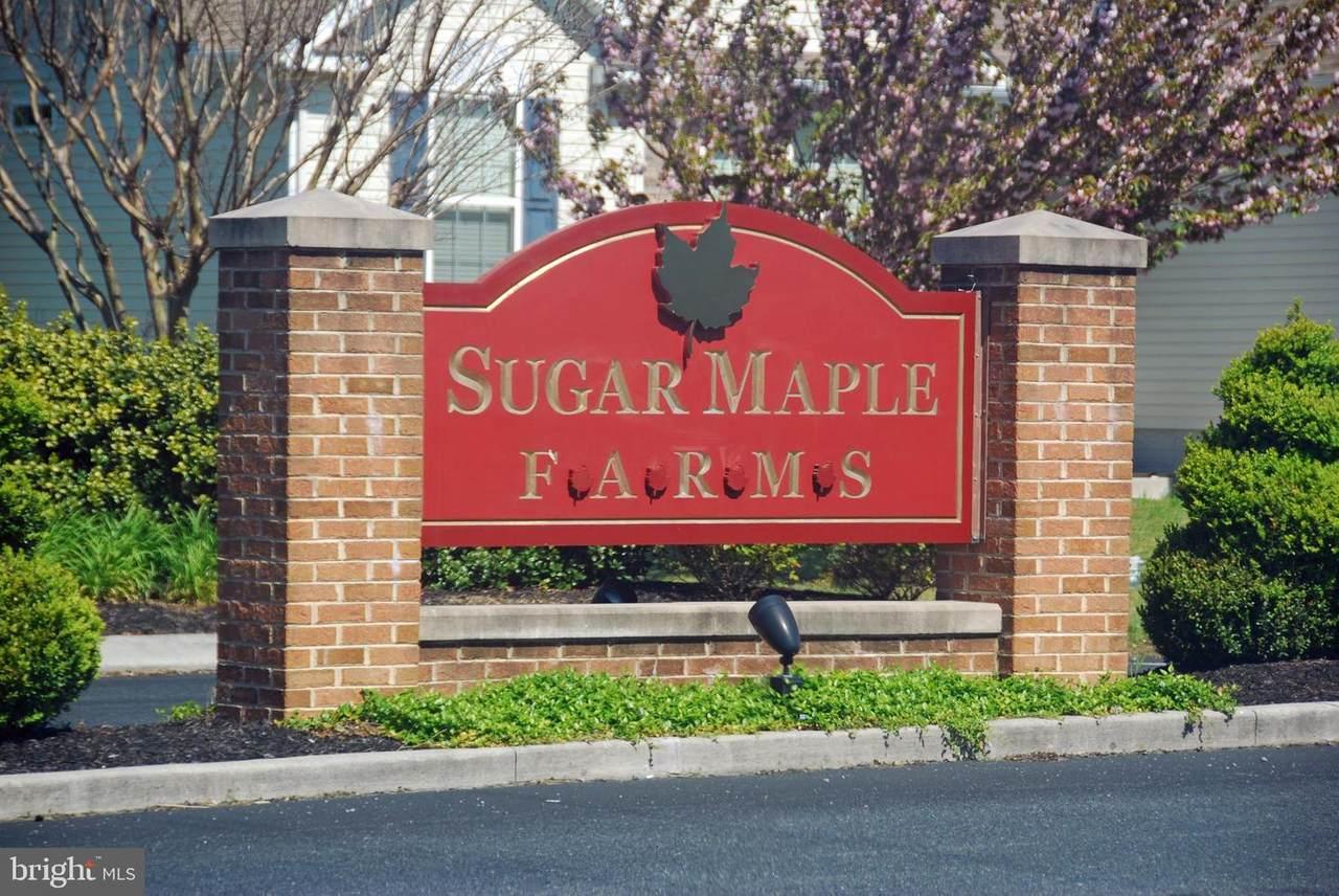 Sugar Maple - Photo 1