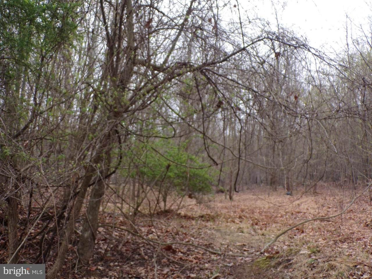 Ashland Woods Drive - Photo 1