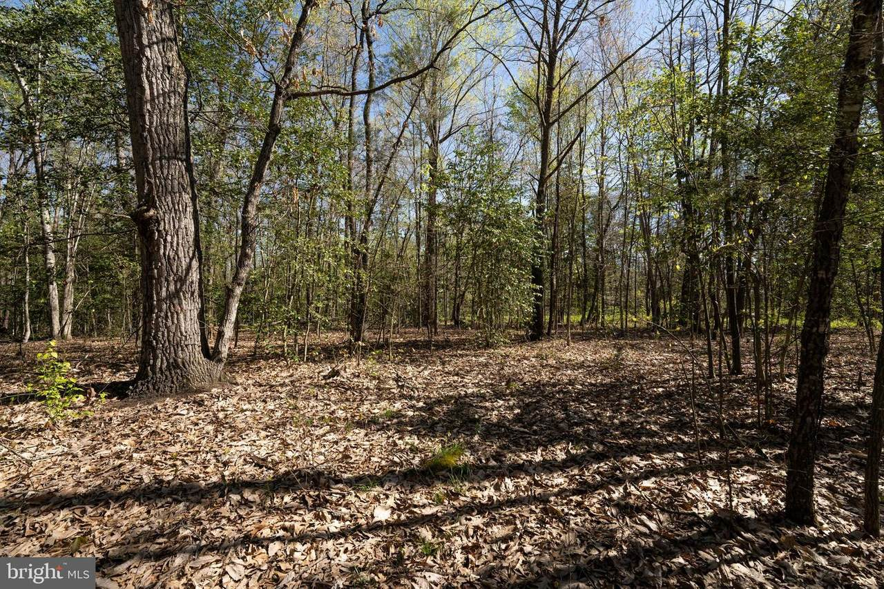 14207 Cedar Plantation Road - Photo 1