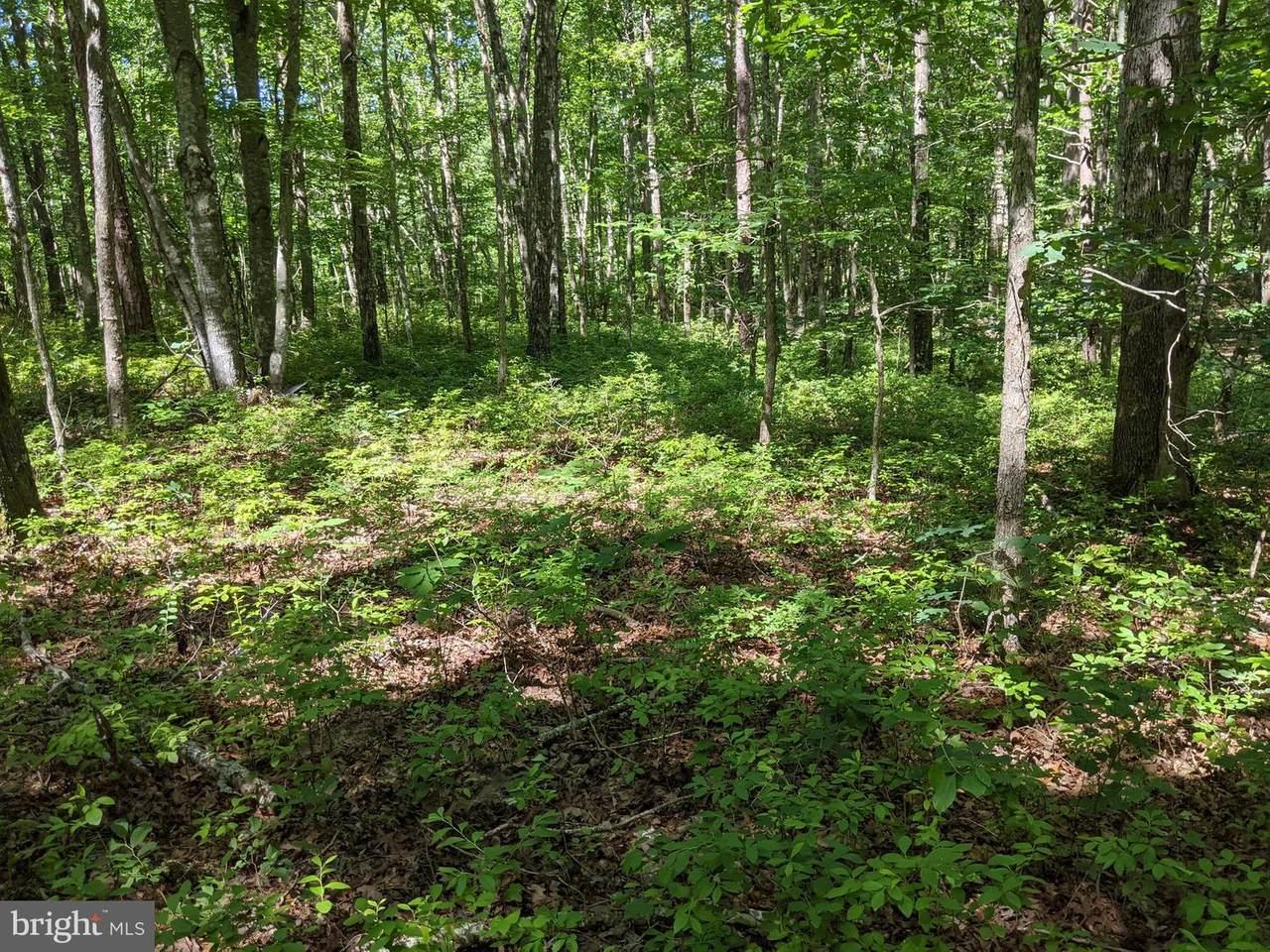 Lot C Bunny Trail - Photo 1