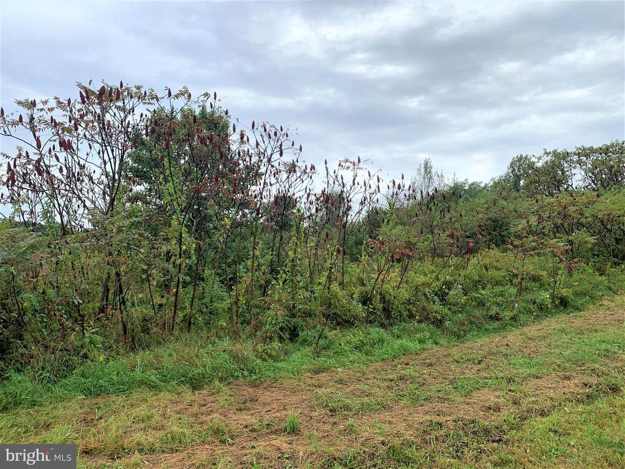 Creekview Road & Buttercup Way - Photo 1