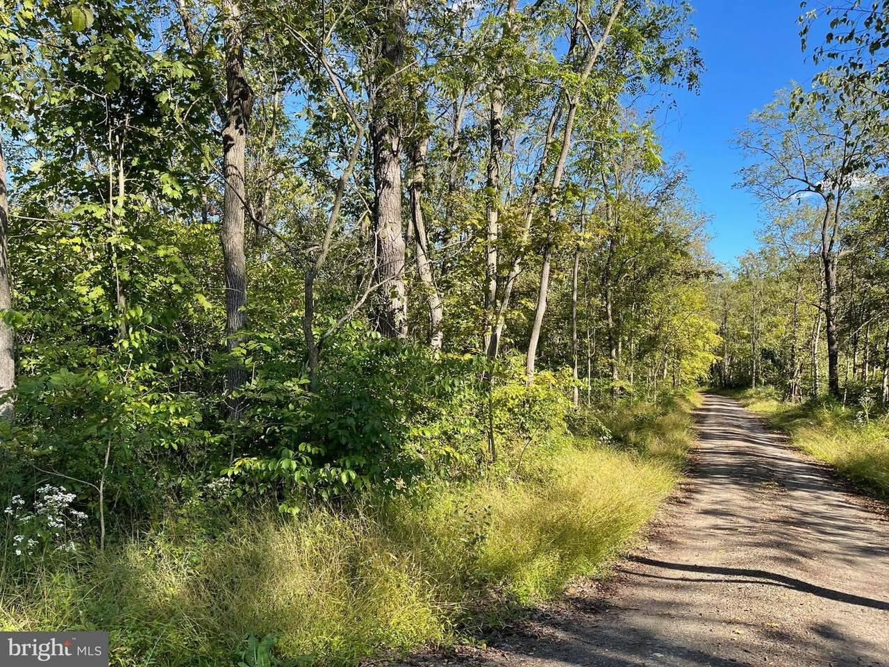 0 Lot 1 & 2 Blue Spruce Lane - Photo 1