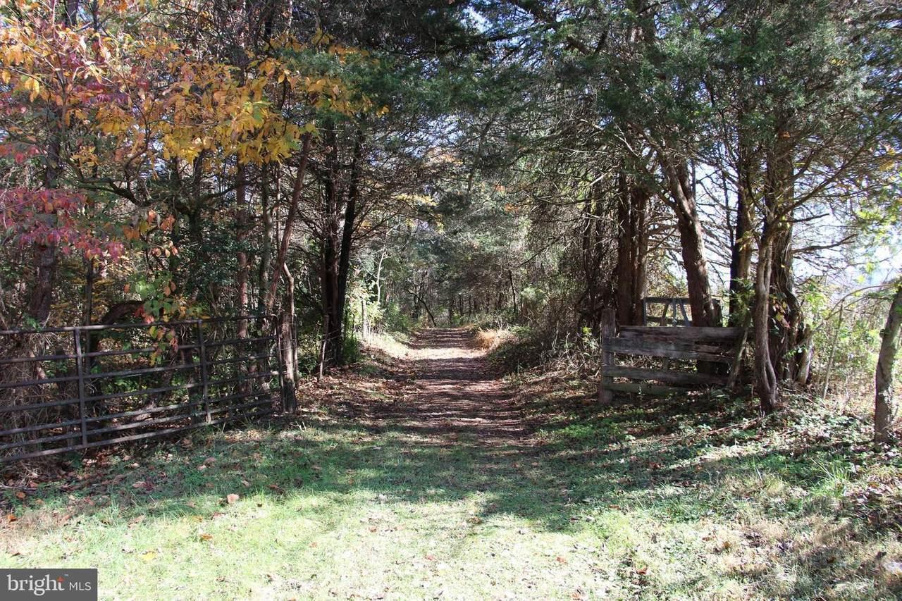 Tree Farm Lane - Photo 1