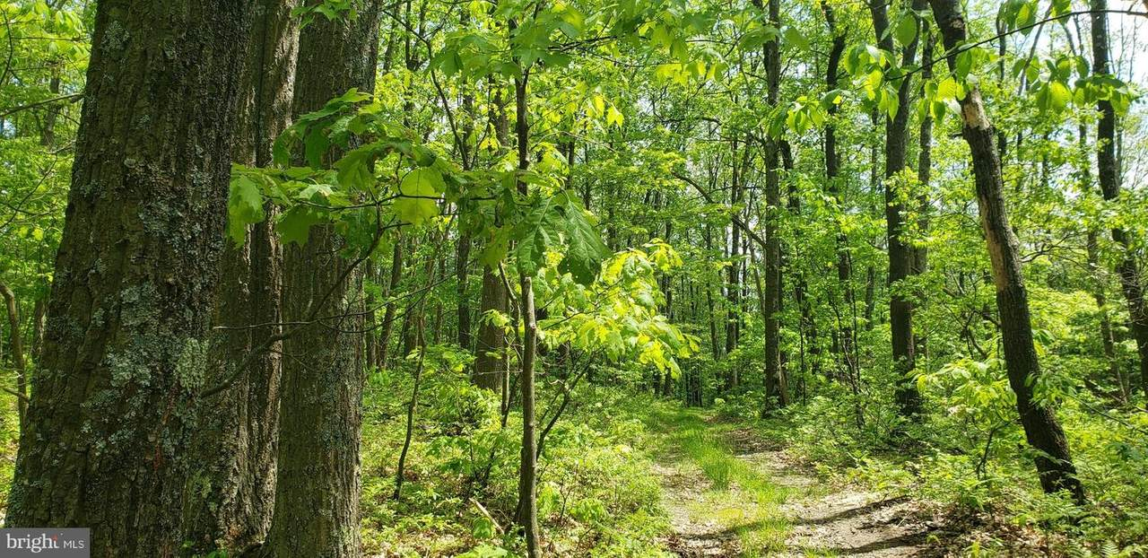 Spring Glade Road - Photo 1