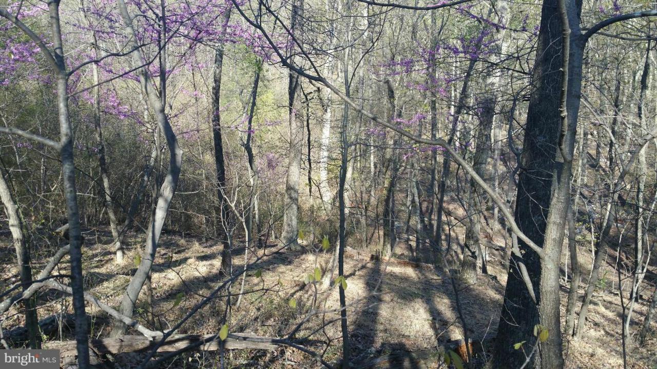 Maverick Trail - Photo 1