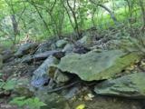 0 Audubon Trail - Photo 4