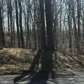 6301 Hickory Bend - Photo 1