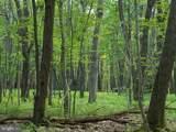 311 Bear Cub Trail - Photo 8