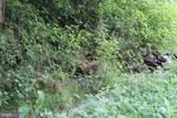 31 Mason Dixon Trail - Photo 5
