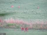 357 Scarlet Oak Circle - Photo 114