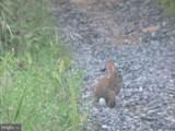 357 Scarlet Oak Circle - Photo 115