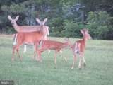 357 Scarlet Oak Circle - Photo 132