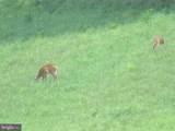 357 Scarlet Oak Circle - Photo 76