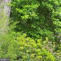 33150 Hummingbird Lane - Photo 56